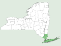 Smilax glauca NY-dist-map.png