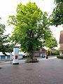 Sommerlinde am Bahnhof Buchholz.jpg