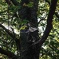 Spindelnät Gotland med dagg.jpg