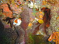 Sponges and corals at Island Rock DSC04775.JPG