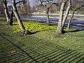 Spring Flowers - geograph.org.uk - 1178999.jpg