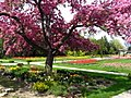 Spring blooms in Jackson Park, Windsor (4546316433).jpg