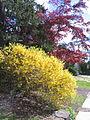 Spring in Princeton 03.JPG
