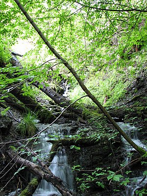 Spring run-off Waterfall made by hillside run-...