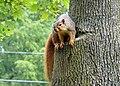 Squirrel 04 (6994360589).jpg