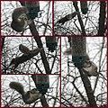 Squirrel Proof Bird Feeder (4217972761).jpg