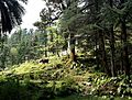 St. John in the Wilderness churchyard, McLeod Ganj, India - September 2014.jpg