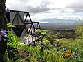 Starr-100616-7110-Agapanthus praecox subsp orientalis-habit view makai-Waipoli Rd Kula-Maui (24672934819).jpg