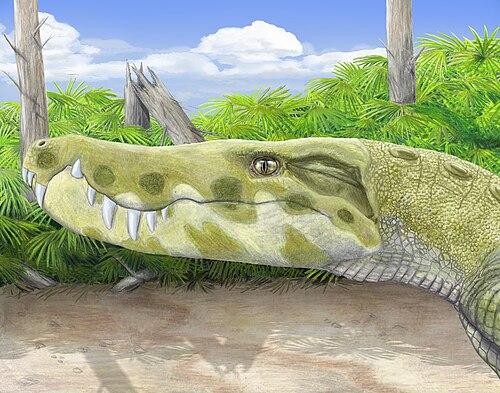 Stratiotosuchus