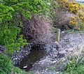 Stream, Ballymacormick Road, Bangor - geograph.org.uk - 773390.jpg