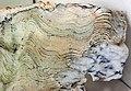 Stromatolite (Strelley Pool Formation, Paleoarchean, 3.35-3.46 Ga; East Strelley Greenstone Belt, Pilbara Craton, Western Australia) 5 (17372575815).jpg