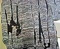 Stromatolitic limestone (Chencha Formation, upper Neoproterozoic, 580 Ma; Patom Upland, Siberia, Russia) 3 (16749471144).jpg
