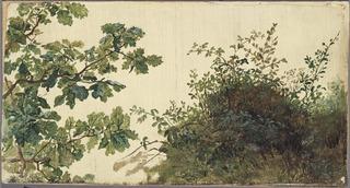 Study of Vegetation