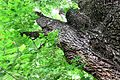 Summer Trees (172938785).jpg