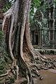 Ta Prohm Angkor ruins and trees.jpg