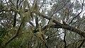Tamarind Moss Forest near Les Makes 2 (31555000225).jpg
