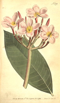 The Botanical Magazine, Plate 279 (Volume 8, 1794).png