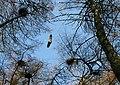 The Heronry at Spynie Loch. - geograph.org.uk - 382972.jpg