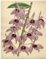 The Orchid Album-01-0128-0042.png