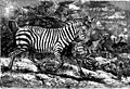 The animals of the world. Brehm's life of animals; (1895) (20781179741).jpg