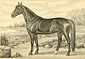 The breeds of live stock, and the principles of heredity (1887) (14594603117).jpg
