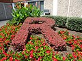 The letter R spelled out in a hedge at Rutgers University.jpg