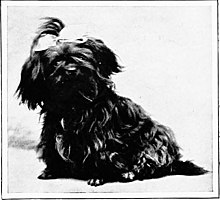 The new book of the dog; a comprehensive natural history of British dogs and their foreign relatives, with chapters on law, breeding, kennel management, and veterinary treatment (1907) (20115892154).jpg