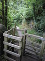 The path down to Fairy Falls, Trefriw - geograph.org.uk - 1441771.jpg