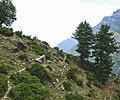 The trail to Kheerganga.jpg