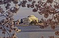 Thomas Jefferson Memorial Under Cherry Blossoms.jpg