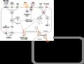 Thrombozytenaggregation.png