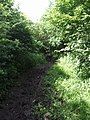Timberland Trail on the Forest of Mercia Way - geograph.org.uk - 847361.jpg