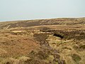 Towards Leana Hill - geograph.org.uk - 405901.jpg