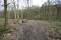 Tracks in Stony Cliffe Wood - geograph.org.uk - 738157.jpg