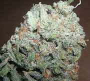 Category:Medical cannabis - Wikimedia Commons