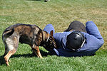 Travis SFS Military Working Dog 150326-F-OH435-064.jpg