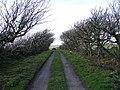 Tree Avenue, Mullhill - geograph.org.uk - 758395.jpg