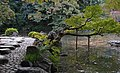 Tree leaning over Osensui (2097314846).jpg