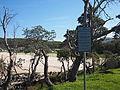 Tree vandalism site at Kioloa February 2015.jpg
