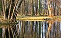 Trees at lakeshore (16188560537).jpg