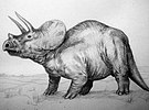 Triceratops ricce 01.jpg