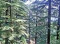 Triund, Himachal Pradesh.jpg