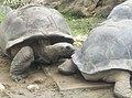 Turtles in Zoo Negara Malaysia (4).jpg