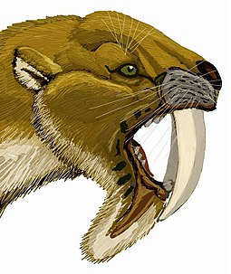 Restoration of the head Tylacosmilus DB.jpg