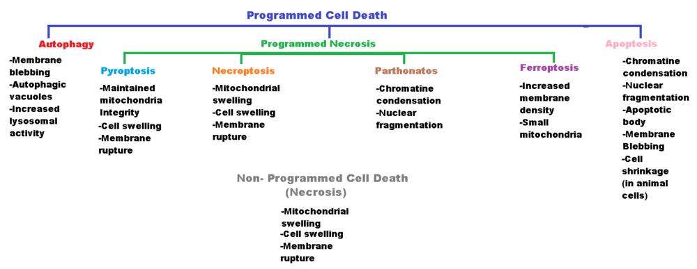 Cell death - Wikiversity