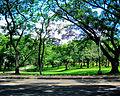 U.P. Diliman Campus Greenery.jpg