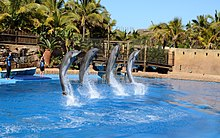 Hotels Near Marineland France