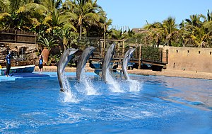 UShaka Marine World - Jumping dolphins in the dolphin show