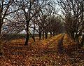 Unnamed Road, Moldova - panoramio (122).jpg