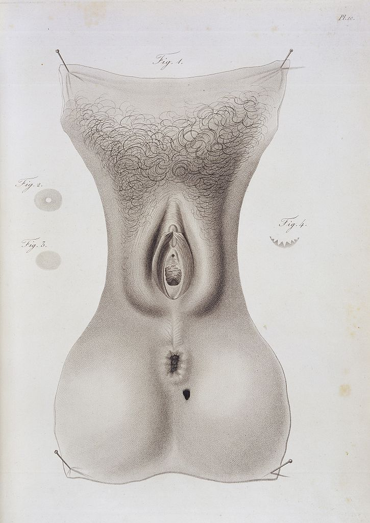 Can vulva and perineum